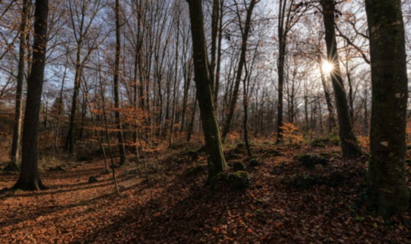 blog_cravatte_sciarpe_autunno_inverno_2019_2020